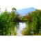 Сдаю в аренду на 49 лет красивое лесное озеро.